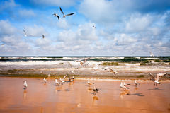 Чайки летания Стоковое Изображение RF