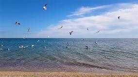 Чайки летают над побережьем сток-видео