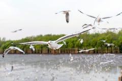 Чайки летая в небо Стоковые Фото