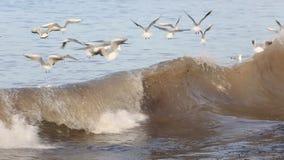 Чайки летая над волнами - замедленным движением сток-видео