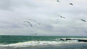 Чайки летая над свирепствуя морем видеоматериал