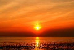 Чайки моря и солнечний свет Стоковые Изображения