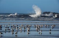 Чайки моря на песчаном пляже стоковые изображения rf