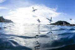 Чайки моря Стоковое Фото