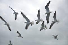 Чайки моря Стоковые Фотографии RF