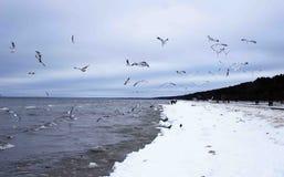 Чайки моря 2 стоковая фотография