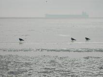 Чайки на айсберге Стоковая Фотография RF