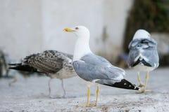 Чайки на бетоне Стоковое Изображение RF