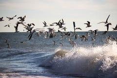 Чайки над водой Стоковое Изображение