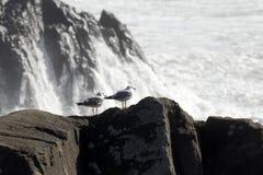 2 чайки на высокой скале Стоковое Фото