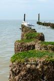 Чайки на деревянных groynes на пляже Стоковые Фотографии RF