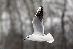 Чайки на зиме Стоковая Фотография RF