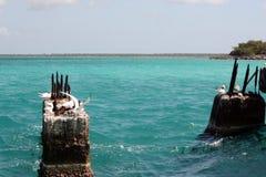 Чайки на камнях в море на солнечный день стоковое изображение rf