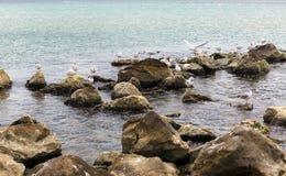 Чайки на камнях Стоковое Изображение