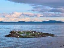 Чайки на малом острове во время захода солнца Стоковое Изображение
