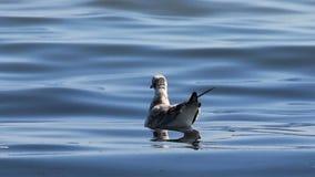 Чайки на море сток-видео