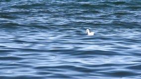 Чайки на море видеоматериал