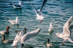 Чайки на море стоковые изображения