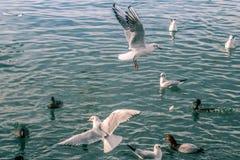Чайки на море стоковое фото rf