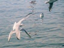 Чайки на море стоковое изображение