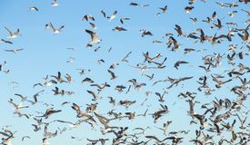 Чайки на океане Стоковые Изображения