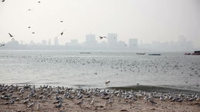 Чайки на пляже Мумбая акции видеоматериалы