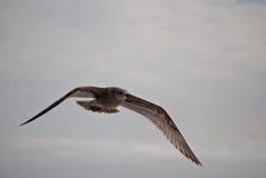 Чайки на пляже Стоковое Изображение