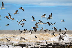 Чайки на побережье Стоковое Изображение RF