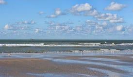 Чайки на побережье Стоковое Изображение