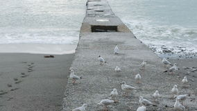 Чайки на пристани во время шторма волны текстуры моря конструкции произведения искысства естественные видеоматериал