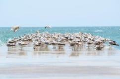 Чайки на пристани Стоковые Изображения RF