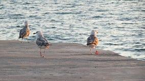 Чайки на пристани стоковое изображение rf