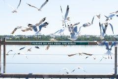 Чайки на птицах подавая запрещенное предупреждение Стоковое фото RF