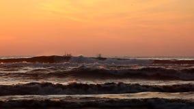 Чайки над пляжем моря выравниваются с утесами, Poti, Georgia видеоматериал