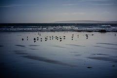 Чайки на пляже в утре Стоковое фото RF