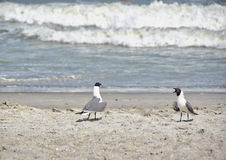 Чайки на пляже Стоковые Фото