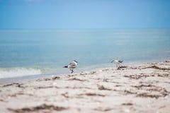 Чайки на пляже Стоковые Изображения