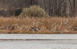Чайки на реке Стоковые Изображения RF
