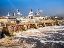 Чайки над рекой, запрудой Athlone в предпосылке Стоковые Фото
