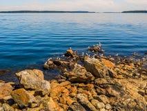 Чайки на скалистом береге Сидни ДО РОЖДЕСТВА ХРИСТОВА, Канада Стоковые Изображения