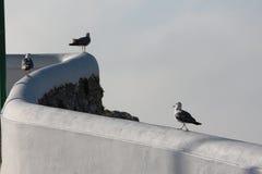 Чайки на стене стоковая фотография rf