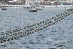Чайки на строке стоковое изображение rf