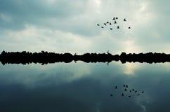 Чайки на утесах на море Стоковые Изображения RF