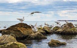 Чайки на утесах Стоковые Фото