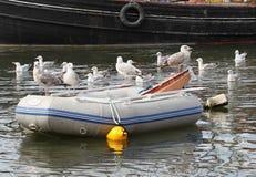 Чайки на Dinghy Стоковые Фотографии RF