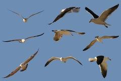 чайки несколько стоковая фотография rf