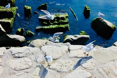 чайки около Каспийского моря стоковые изображения