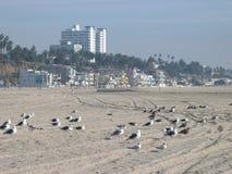 Чайки охлаждая, пляж Санта-Моника, Калифорния, США Стоковое Изображение