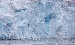 Чайки подавая около стены ледника Стоковые Изображения RF