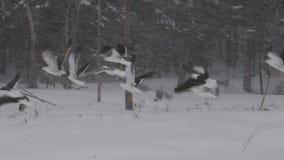 Чайки принимают от покрытого снег поля акции видеоматериалы